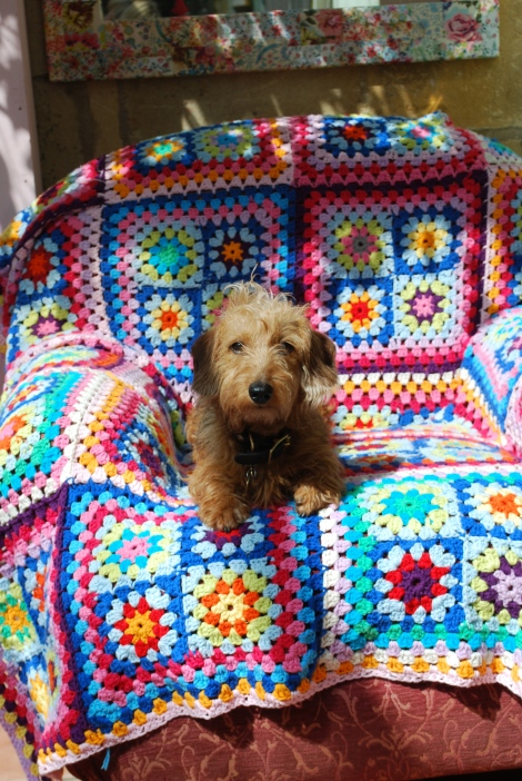 Mr Pickles posing for the camera showing off my most colourful granny square blanket.